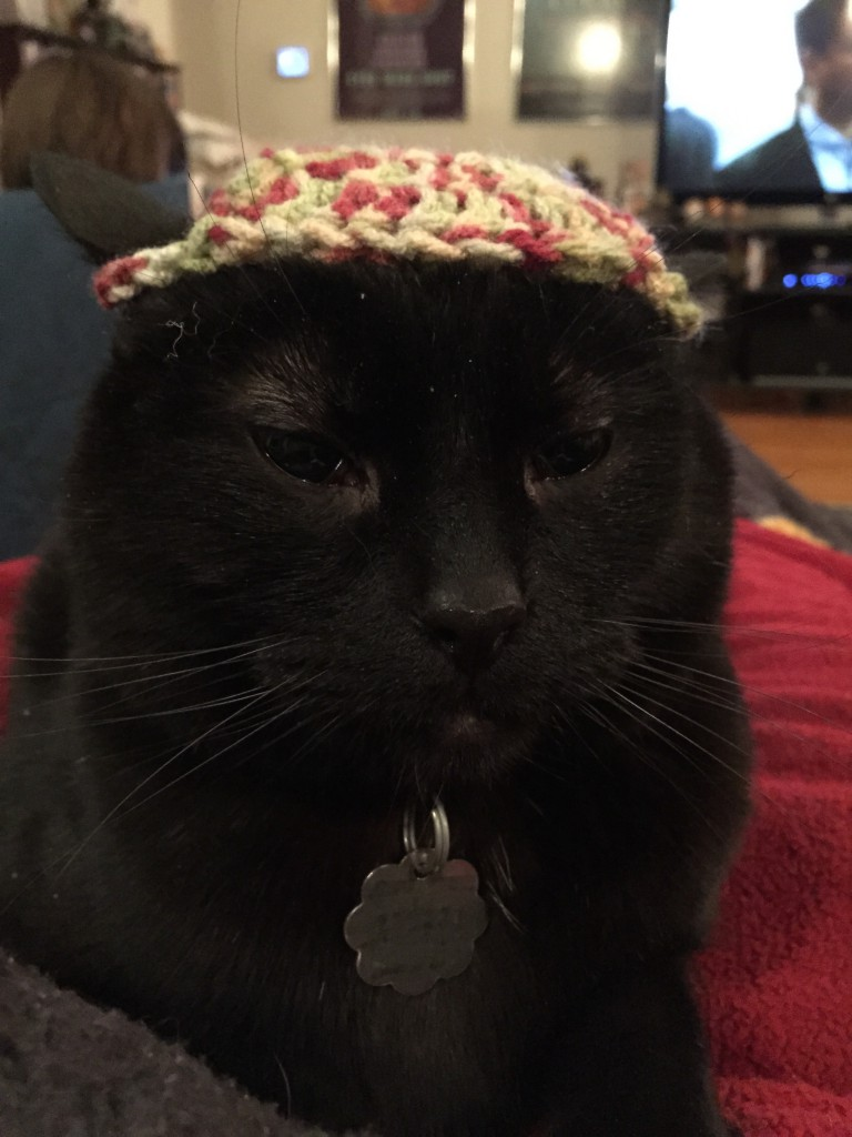 Toby in the Beanie